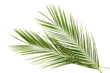Green Leaves Of Palm Tree Isol...