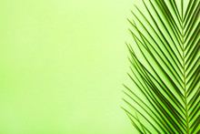 Green Leaf Of Palm Tree On Gre...