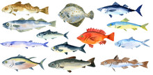 Watercolor Drawing Fishes
