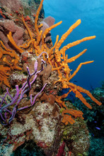 Colorful Coral Reef In The Cozumel Marine National Park