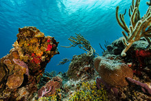 Colorful Coral Reef In The Coz...