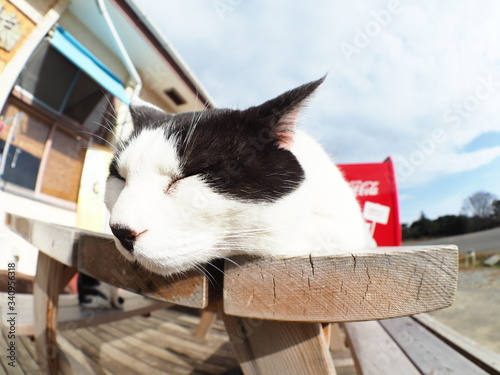 机の上で眠っている猫 Obraz na płótnie