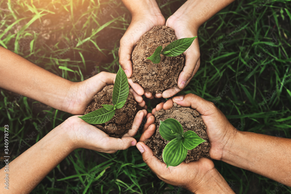 Fototapeta three hand holding young tree for planting. nurture Environmental concept