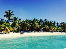 Coconut Palm Trees On Beach Against Clear Sky