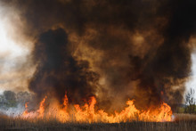 Raging Forest Spring Fires. Bu...