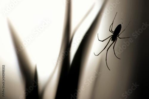 Araignée Canvas Print