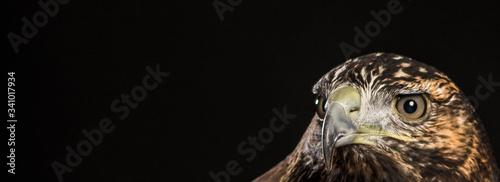 Foto Close-up Of Eagle
