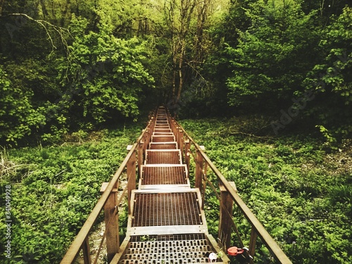 Photo High Angle View Of Footbridge In Forest