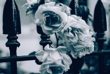Rose Flowers On Metal Fence