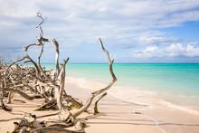 Driftwood On Beach, Cuba