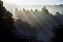 Bruma De La Mañana, Niebla