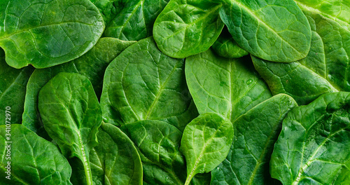 Obraz Fresh green spinach, background with leaves, spinach texture - fototapety do salonu