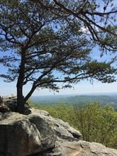 Tree On A Rock Outcropping Ove...