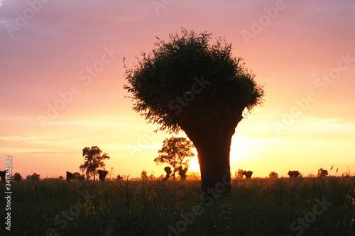 Zachód słońca na Żuławach Wiślanych
