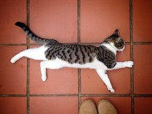 High Angle View Of Cat Resting On Tiled Floor