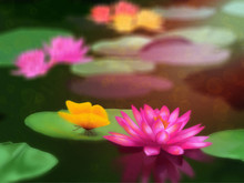 Tropical Flower With Butterfly. Tropical Aquatic Flower In A Pond With Bubbles Bokeh Effect. Painted On Fine Art Paper With Oil Colors