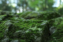 Close-up Of Moss Covered Rock