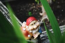 Close-up Of Garden Gnome
