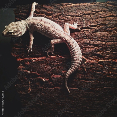 Close-up Of A Reptile On Wooden Surface Wall mural