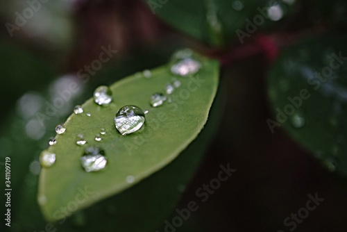 Canvastavla Close-up Of Water Drops On Leaf