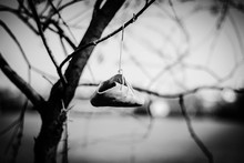 Close-up Of Shoe Hanging On Bare Tree