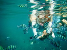 Scuba Diver Feeding Fish Under...