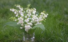 Bouquet De Muguet Dans Le Jardin
