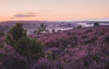 Purple Flowers On Field Against Sky At Sunset