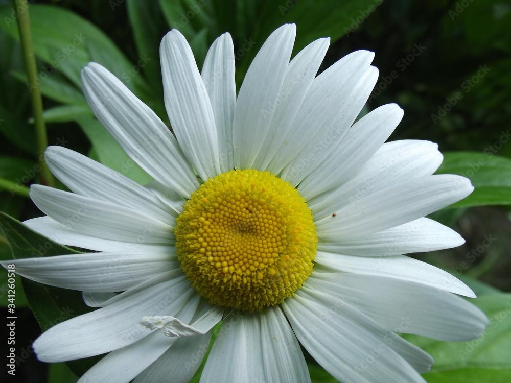 bialy kwiat - obrazy, fototapety, plakaty