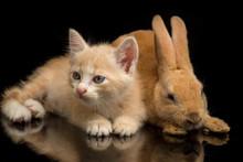 A Beautiful Orange Cat Kitten ...