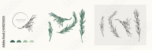 Fototapeta Rosemary logo and branch. Hand drawn wedding herb, plant and monogram with elegant leaves for invitation save the date card design. Botanical rustic trendy greenery obraz