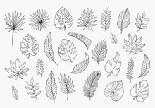 Tropical Leaves In Doodle Styl...
