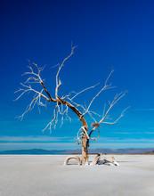 Bare Tree On Landscape Against Blue Sky
