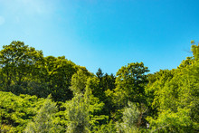 Lush Green Treetops In The Sun With Blue Sky