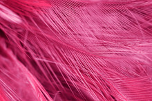 Full Frame Shot Of Pink Feather
