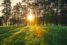 Sun Beams Pour Through Trees I...