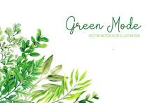 Wild Herbs, Leaves And Ferns, Green Corner Frame