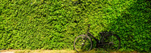 A Bicycle With A Green Tree Wa...