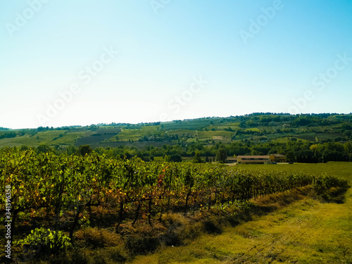 Landscape of the Tuscan vineyards, Chianti region, Italy Canvas
