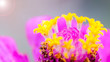canvas print picture - beautiful 4K Wallpaper. Close-up of yellow flower's carpel on top of pink flora.