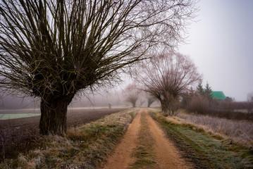 Stara droga, stare wierzby. Szosa Kruszewska. Dolina Narwi. Narwiański Park Narodowy. Podlasie, Polska