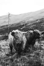 Wild Animals In The Wild - Scotland