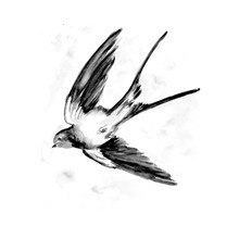 Watercolor Painting Of Swallow Bird Sketch Art Illustration
