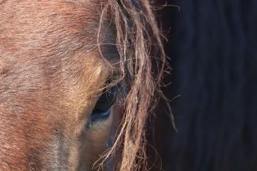 œil de cheval alezan