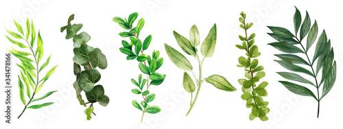 Wild leaves and bindweed, Watercolor bright greenery collection Billede på lærred