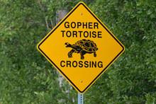 Gopher Tortoise Crossing Road Sign