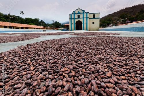 Fotografie, Obraz cocoa beans drying in the courtyard of the chuao church Aragua state Venezuela