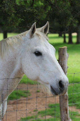 A Closeup of A Beautiful Horse In A Pasture In South Central Oklahoma