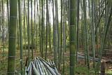 아름다운 대나무 숲