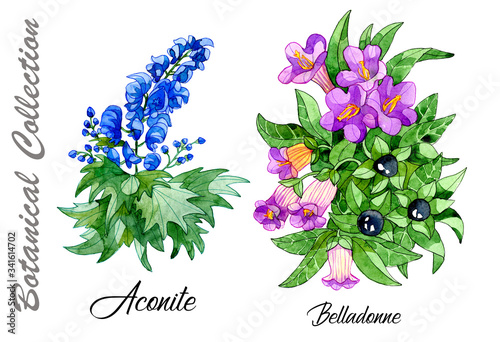 Photo Design set of Aconite and Belladonne flowers isolated on white.
